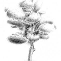 strom_1